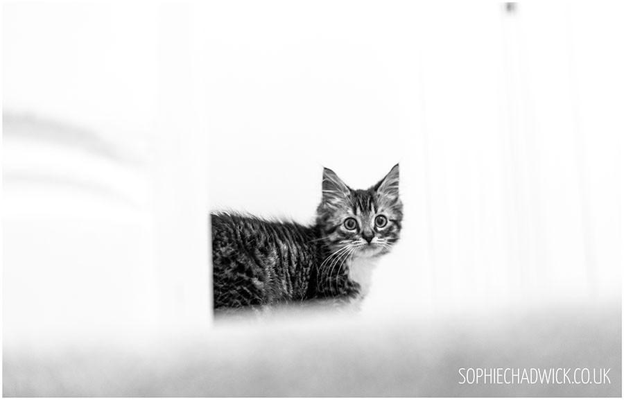 SophieChadwickPhotography5